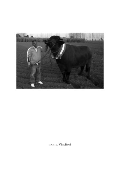 Il toro più bello del mondo
