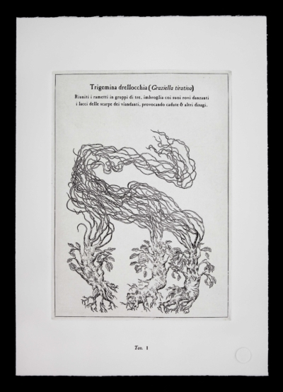Trigemina-drellocchia-pianta-immaginaria