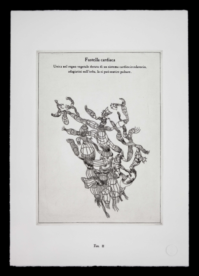 Fustella-cardiaca-pianta-immaginaria