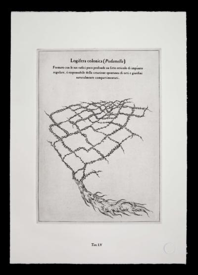 Podamella-pianta-immaginaria