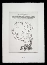 Nefelia-maga-pianta-immaginaria